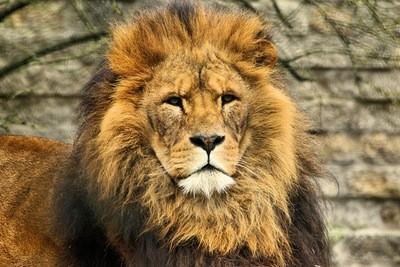 אריה אמיתי לא צריך לשאוג כדי שידעו שהוא מלך מלך מלך מלך